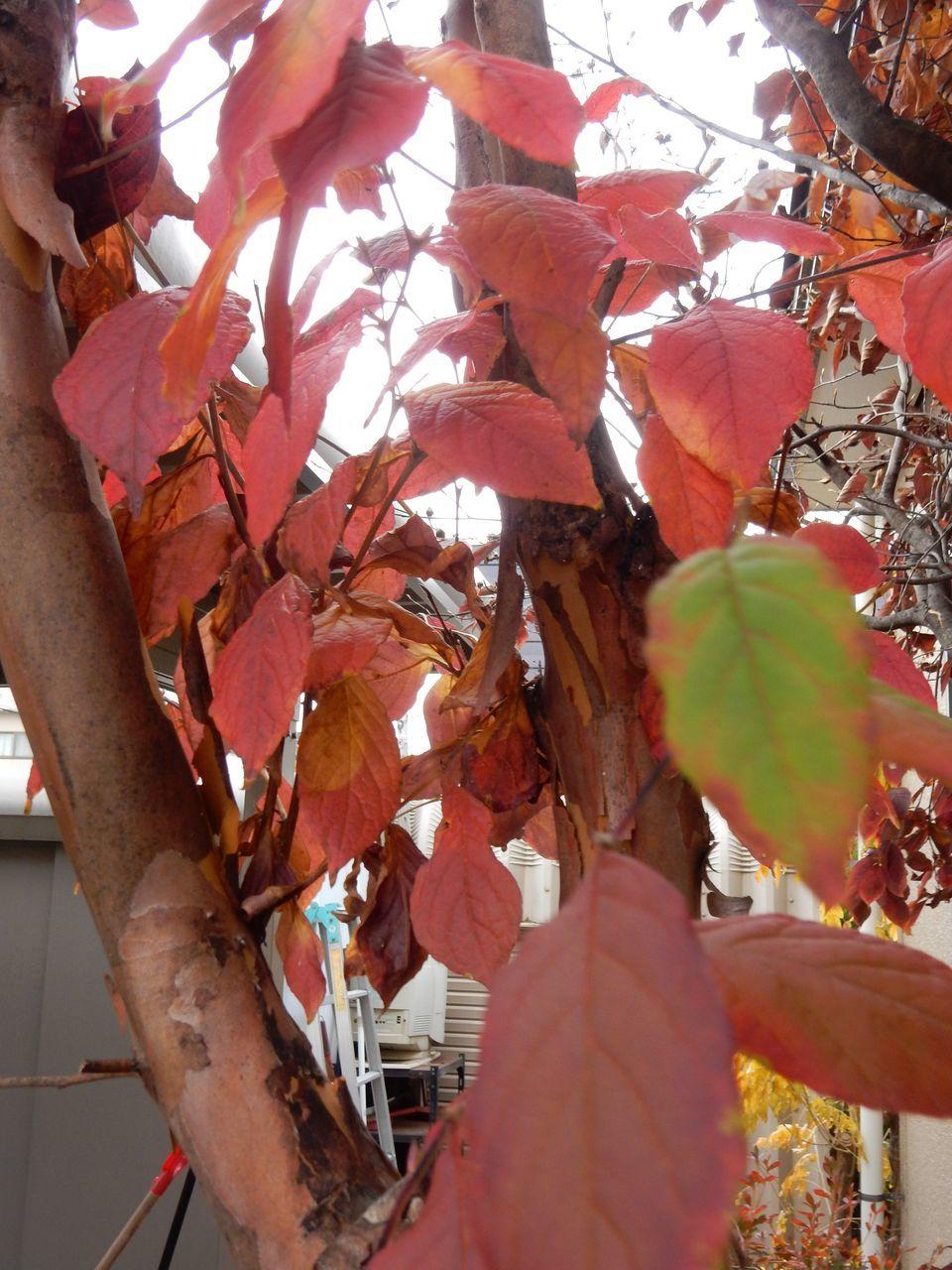 よく見ると一枚一枚の葉の色だって違います_c0025115_21114752.jpg