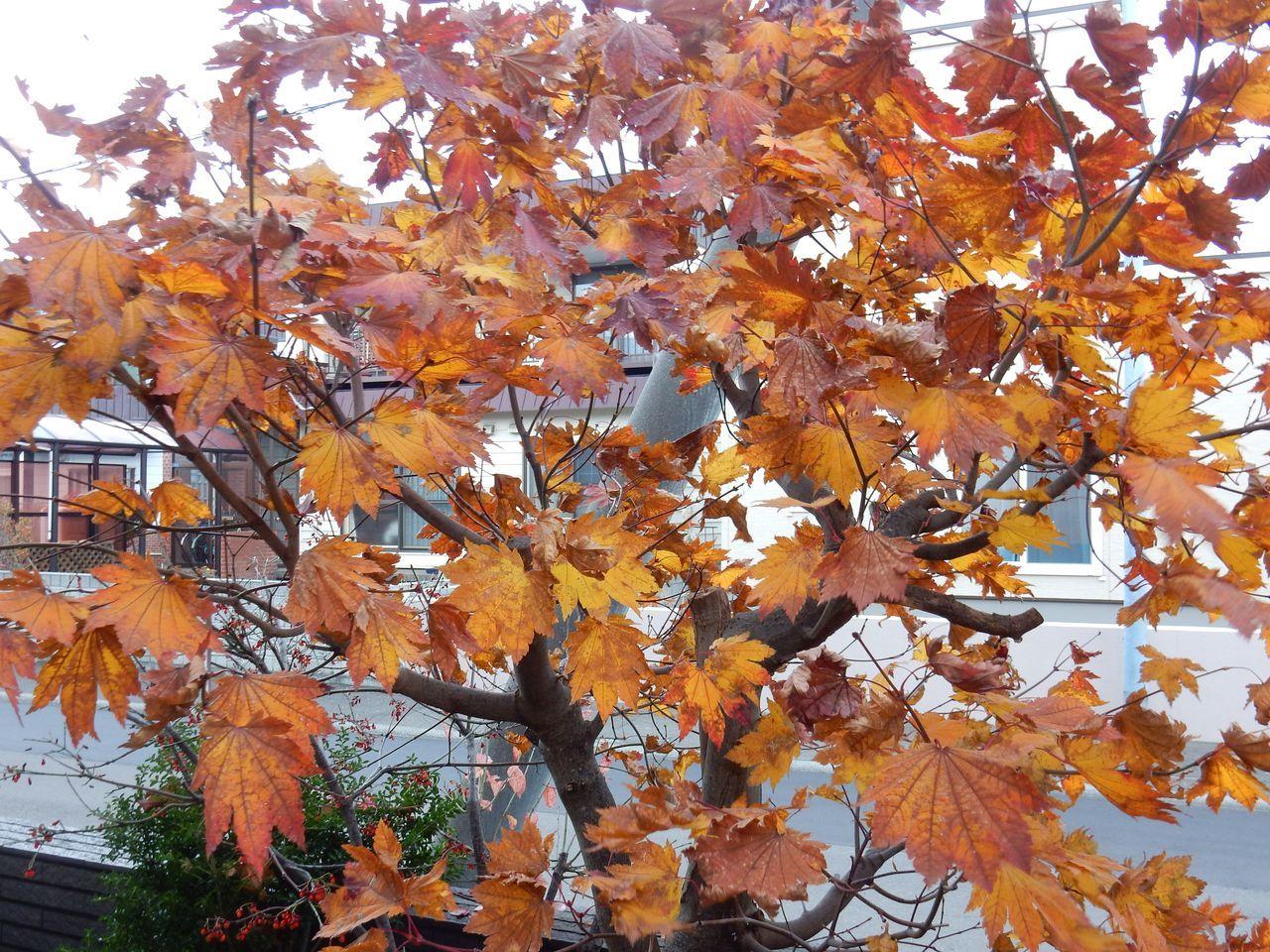 よく見ると一枚一枚の葉の色だって違います_c0025115_21115744.jpg