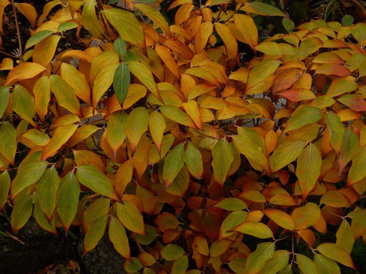 よく見ると一枚一枚の葉の色だって違います_c0025115_21120750.jpg