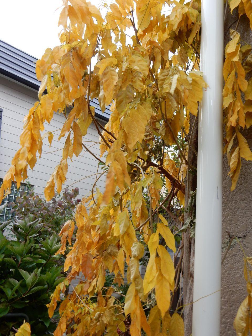 よく見ると一枚一枚の葉の色だって違います_c0025115_21123760.jpg