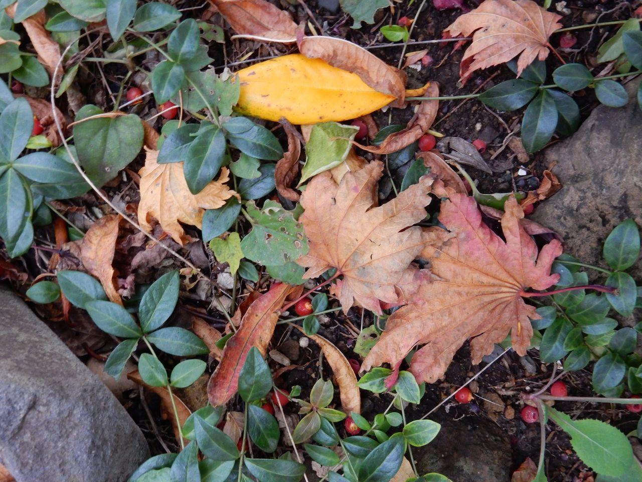 よく見ると一枚一枚の葉の色だって違います_c0025115_21125433.jpg