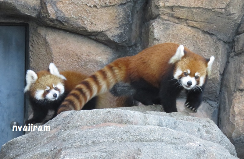 快晴の王子動物園_f0002743_11136.jpg