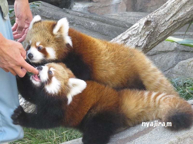 快晴の王子動物園_f0002743_162667.jpg