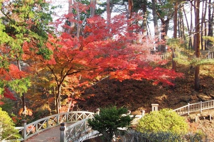 香雪園の紅葉_b0106766_14181891.jpg