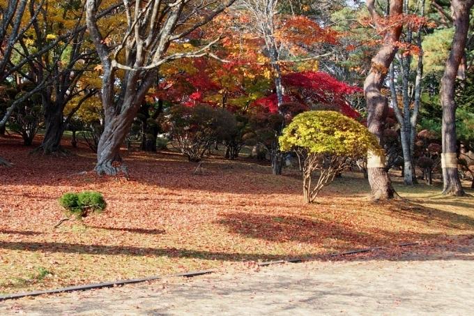 香雪園の紅葉_b0106766_14183728.jpg