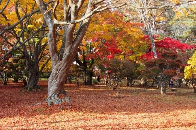 秋の香雪園。_b0106766_14225111.jpg