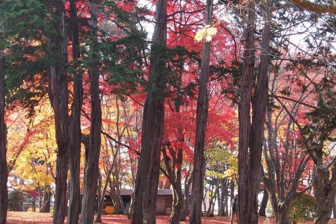 秋の香雪園。_b0106766_14225592.jpg