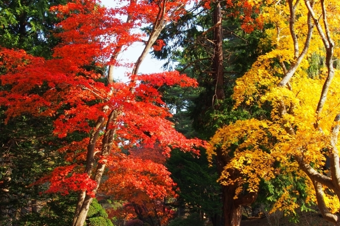 秋の香雪園。_b0106766_14225823.jpg