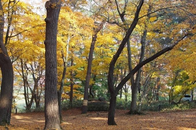 秋の香雪園。_b0106766_14230841.jpg
