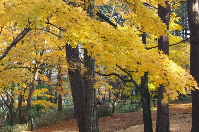 秋の香雪園。_b0106766_14231140.jpg