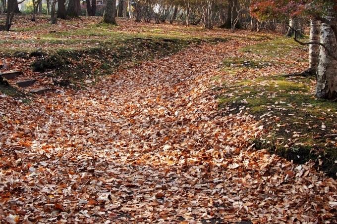 秋の香雪園。_b0106766_14231353.jpg