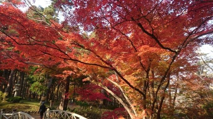 香雪園、見晴公園の紅葉_b0106766_14503683.jpg