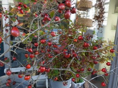 オークリーフ(秋はいいですね)_f0049672_17303776.jpg
