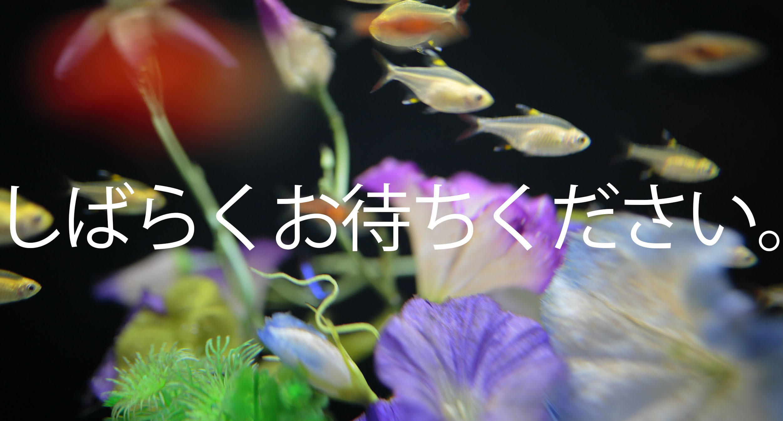 d0225975_20474124.jpg