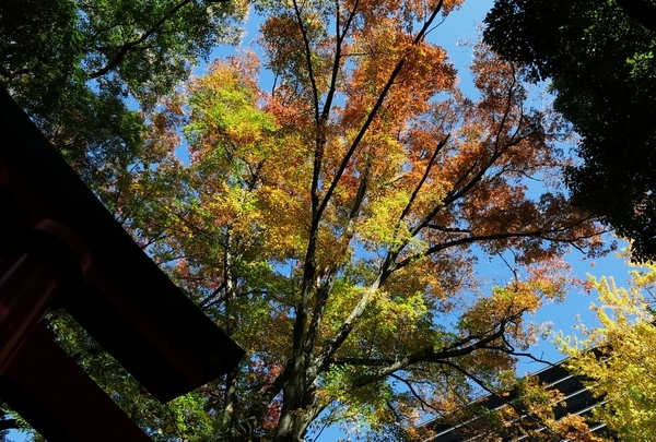 豊川稲荷東京別院_a0248481_15482208.jpg
