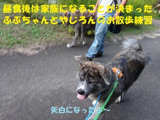 f0121712_00371724.jpg