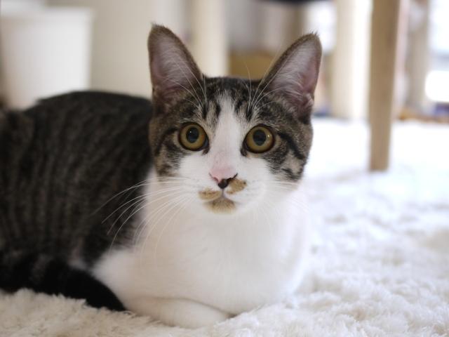 猫のお留守番 みりんちゃん編。_a0143140_22260293.jpg