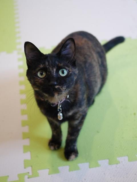 猫のお留守番 ユリちゃん編。_a0143140_22440294.jpg