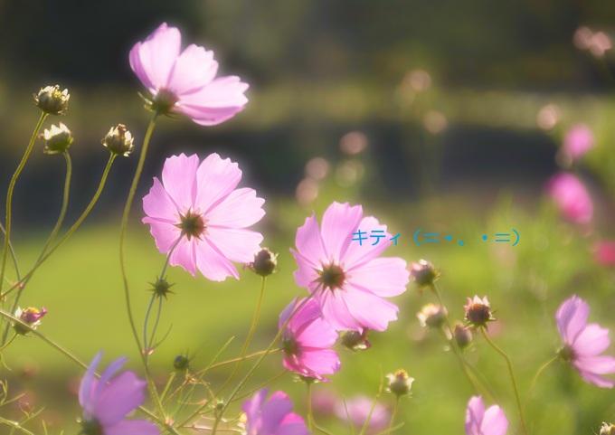 a0103194_1848301.jpg