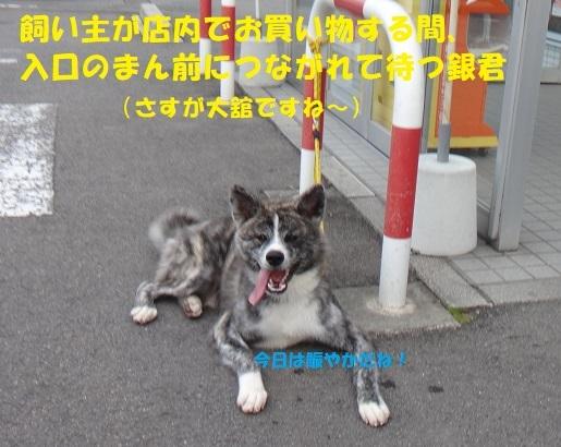 f0121712_15032158.jpg