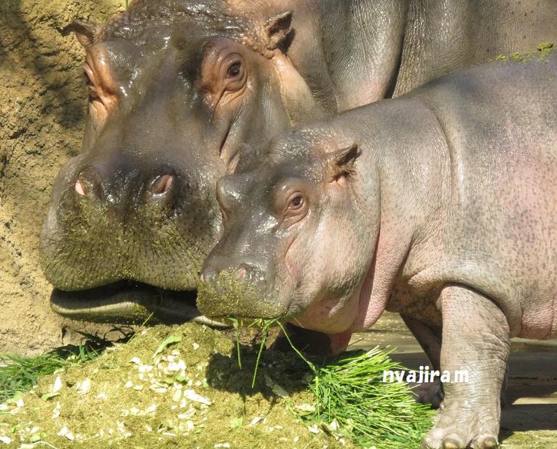 王子動物園続き(2017.11.2)_f0002743_1258347.jpg