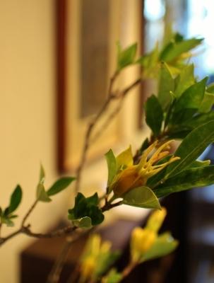 花だより クチナシの実_a0279848_15044114.jpg