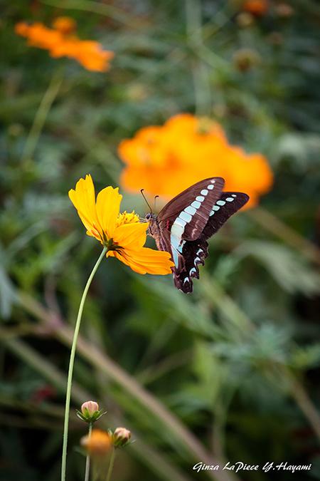 花のある風景 蝶と花_b0133053_02170038.jpg