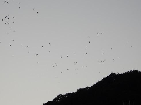 夕焼けは一瞬、カラスは山へ_e0175370_21231914.jpg