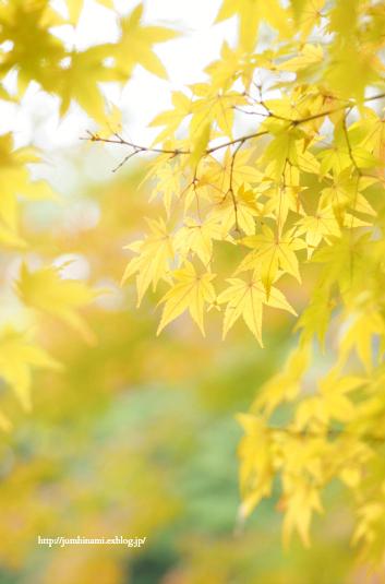 秋色_e0268051_13341802.jpg