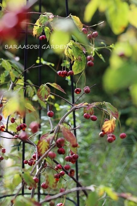 秋の庭_a0135366_17165953.jpg