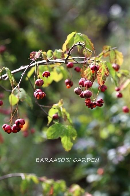 秋の庭_a0135366_17173562.jpg