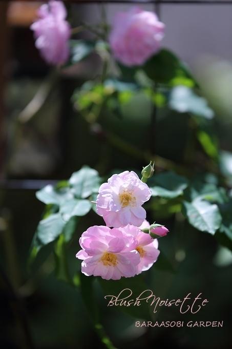 秋の庭_a0135366_20554605.jpg