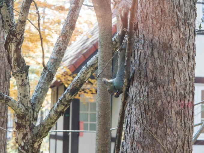 秋深まり・・どんぐりを美味しそうに食べるエゾリス君。_f0276498_09183156.jpg