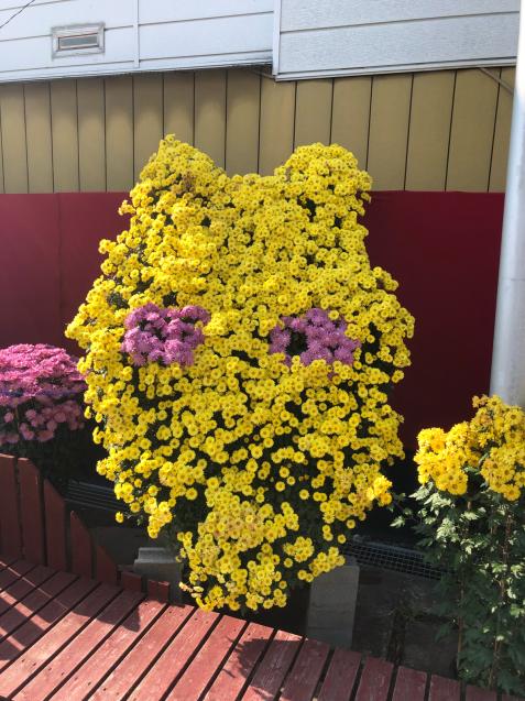 笠間稲荷神社 菊まつり_f0144003_18131510.jpg