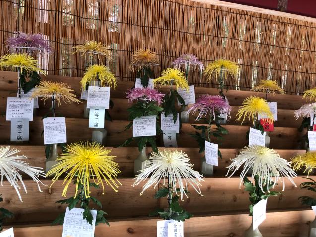 笠間稲荷神社 菊まつり_f0144003_18141492.jpg
