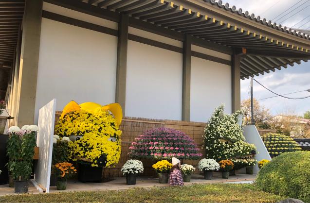 笠間稲荷神社 菊まつり_f0144003_18151335.jpg