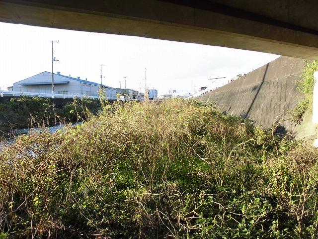 久々の「小潤井川の草刈り清掃」と、「ホルモン忠ちゃん」で久々の「締めのラーメン」_f0141310_08164033.jpg