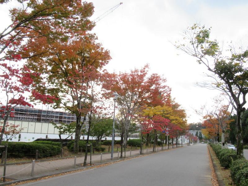 街路樹も紅葉の盛り_e0048413_19505397.jpg