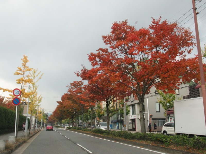 街路樹も紅葉の盛り_e0048413_19510900.jpg
