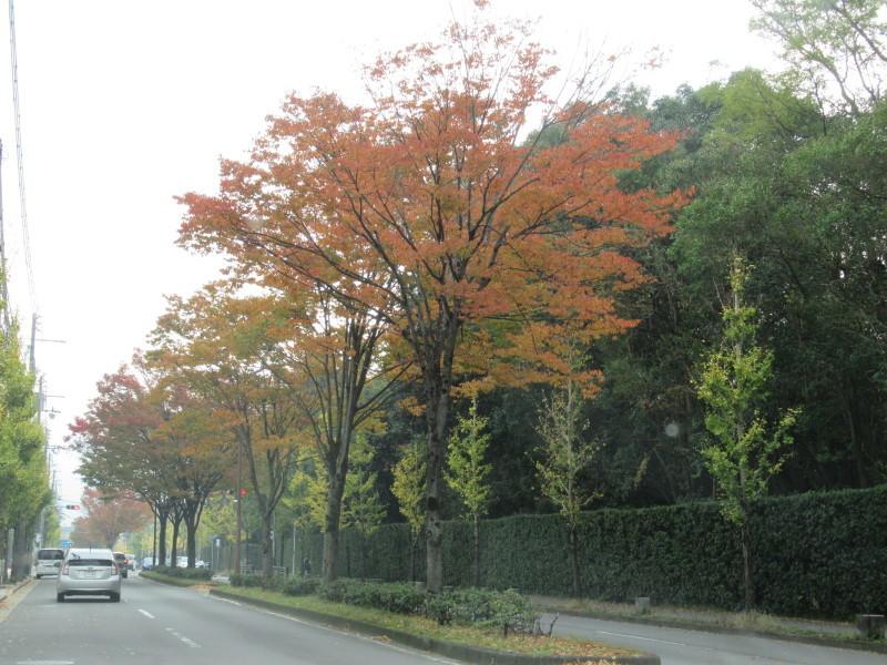 街路樹も紅葉の盛り_e0048413_19511993.jpg
