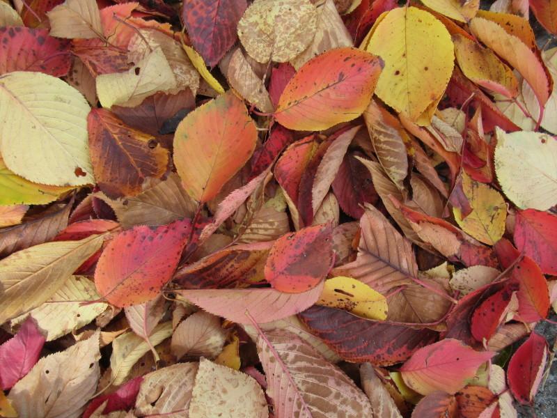 街路樹も紅葉の盛り_e0048413_19513225.jpg