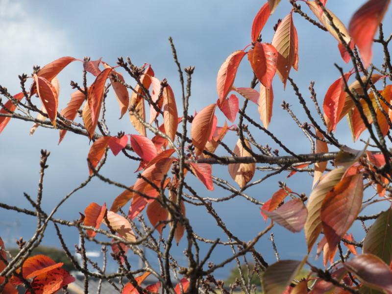 街路樹も紅葉の盛り_e0048413_19514195.jpg