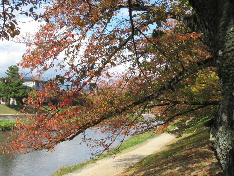 街路樹も紅葉の盛り_e0048413_19515796.jpg