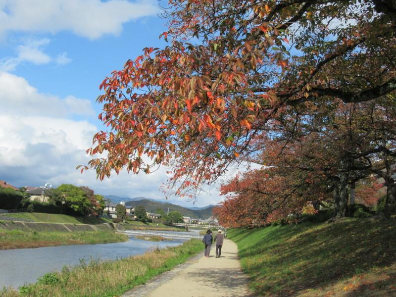 街路樹も紅葉の盛り_e0048413_19521172.jpg