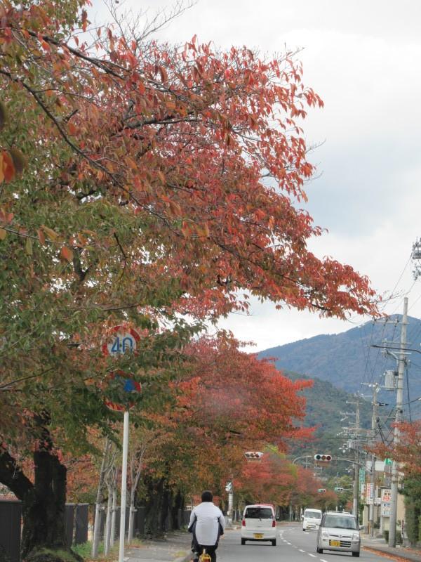 街路樹も紅葉の盛り_e0048413_19522028.jpg