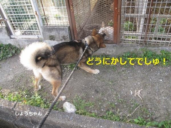 f0143123_18030835.jpg