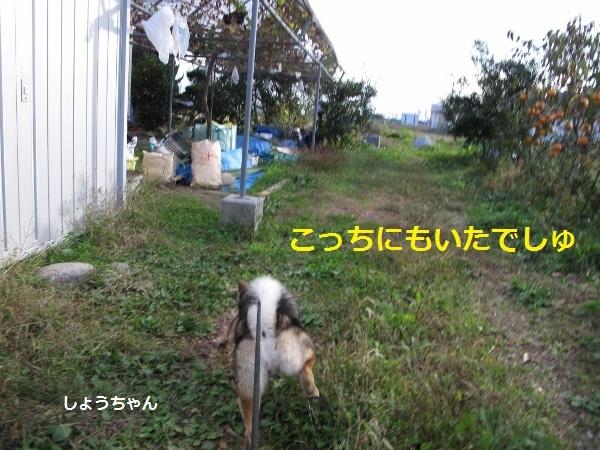 f0143123_18051362.jpg