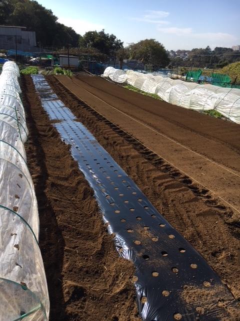 昨日播種した蕪の畝 は4分の1は赤軸のほうれん草を播種 穴あきトンネルを張りました_c0222448_12461682.jpg