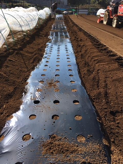 昨日播種した蕪の畝 は4分の1は赤軸のほうれん草を播種 穴あきトンネルを張りました_c0222448_12464333.jpg