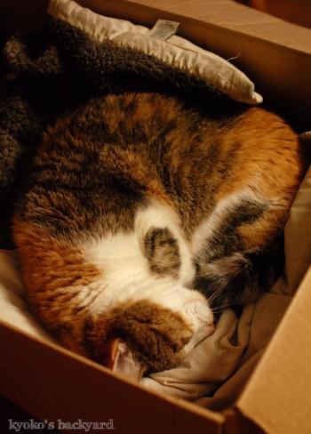 Sandyの箱ベッド_b0253205_06403247.jpg